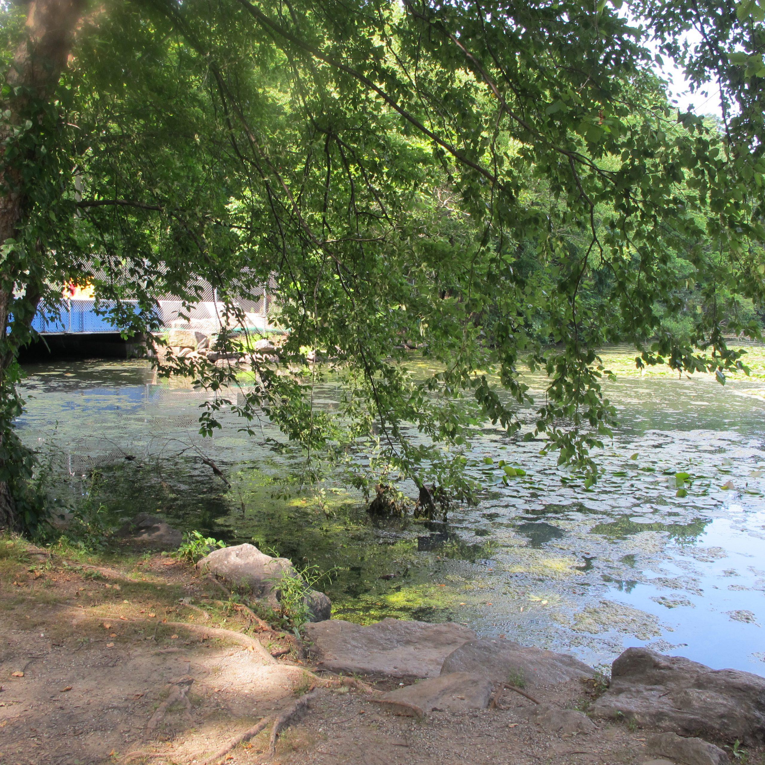 002. Tibbetts Brook Lake